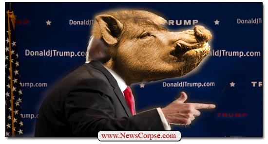 Donald Trump Pig