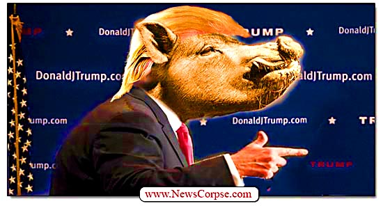 Donald Trump Swine Pig